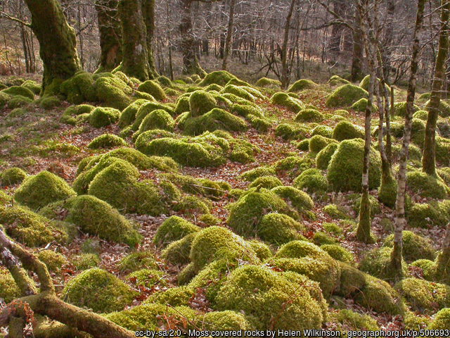Moss covered rocks in Scottish woodland