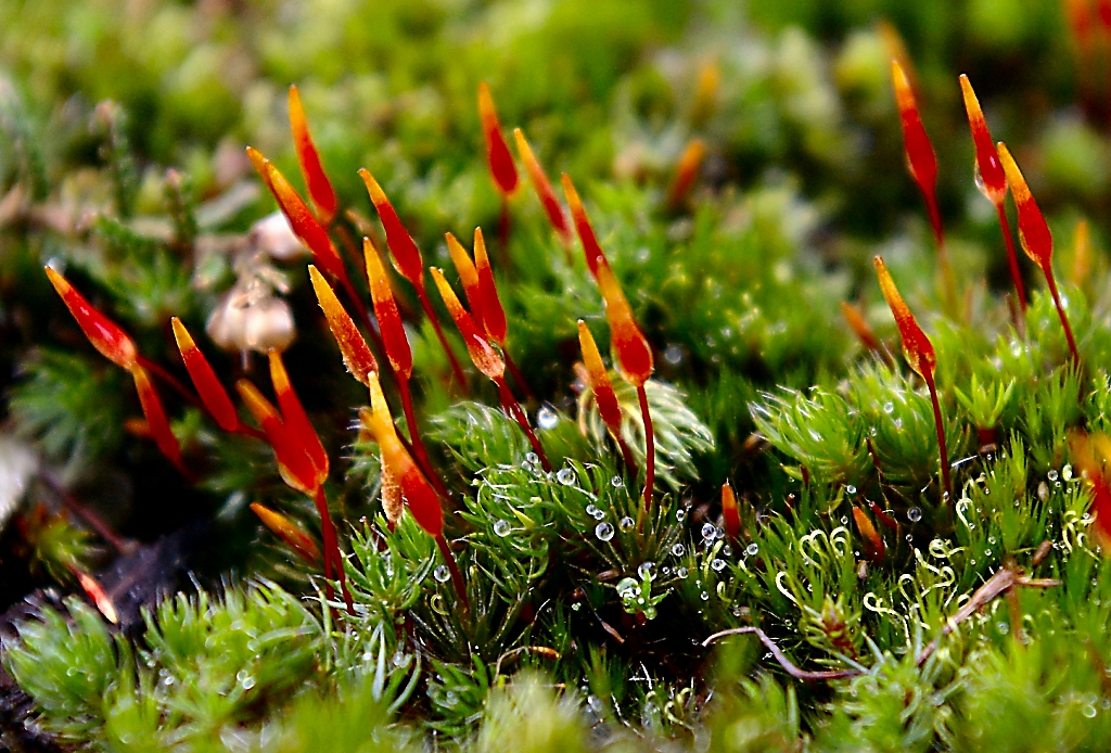 Close-up of brightly coloured Yorkshire Moor moss