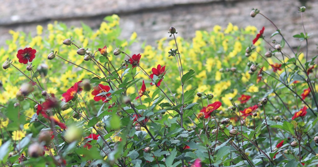 In The Bishop S Garden Botany Karen