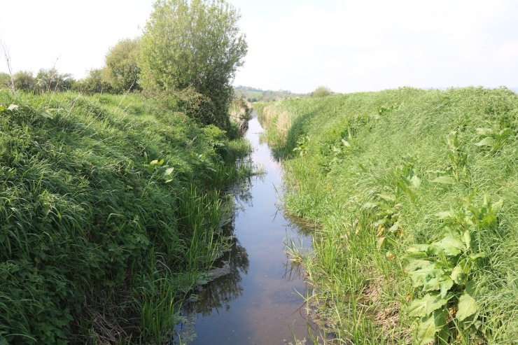 Perspective shot showing the depth of a rhyne at a low water level